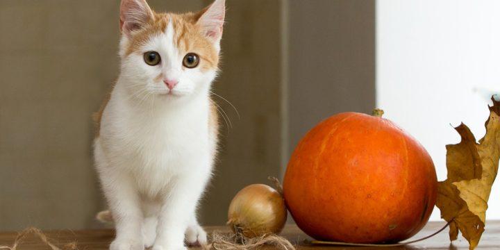 Datos interesantes acerca de los gatos como mascotas