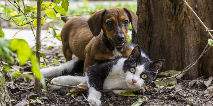 Principales enfermedades parasitarias de tipo infeccioso en gatos y perros