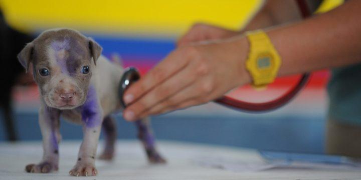 Cada cuando se debe llevar a revisión con el veterinario a una mascota