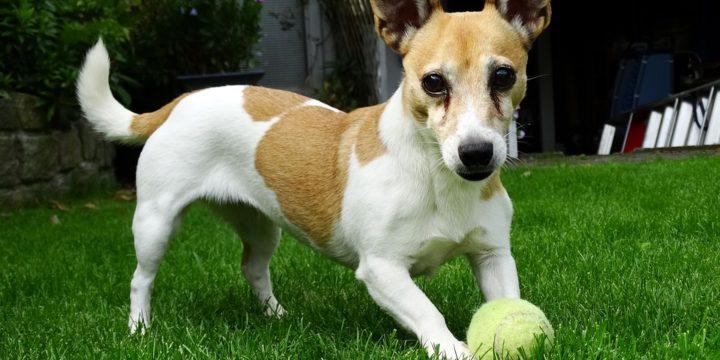 Recomendaciones para el adiestramiento canino