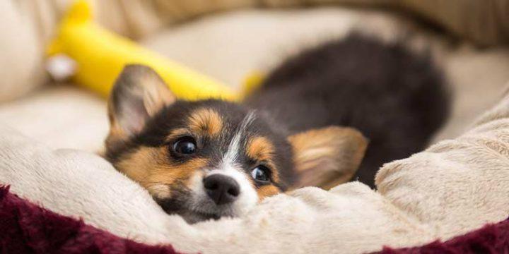Consejos para atender a un cachorro por las noches