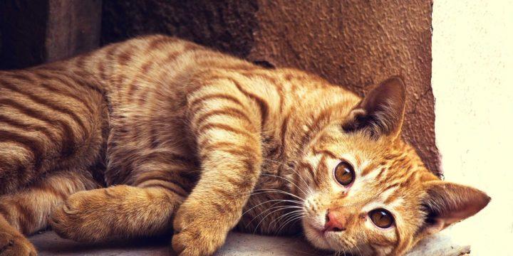 Aprende más acerca del comportamiento de tu gato