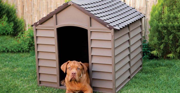 Consejos para comprar una caseta para el perro