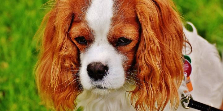 Enfermedades invernales que más afectan a los perros
