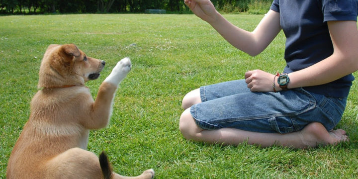 Corregir a un perro, lo que se debe y lo que no se debe de hacer