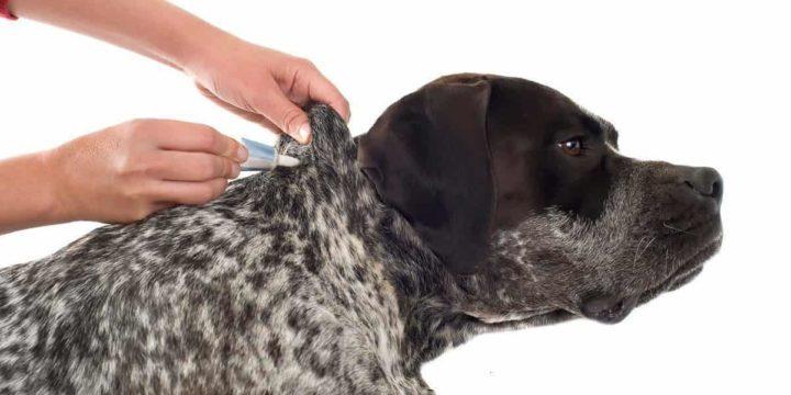 Garrapatas, atención veterinaria y métodos de prevención