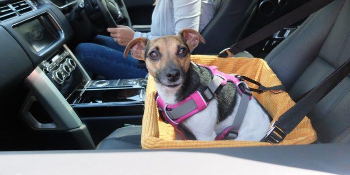 Recomendaciones para viajar en coche con tu perro