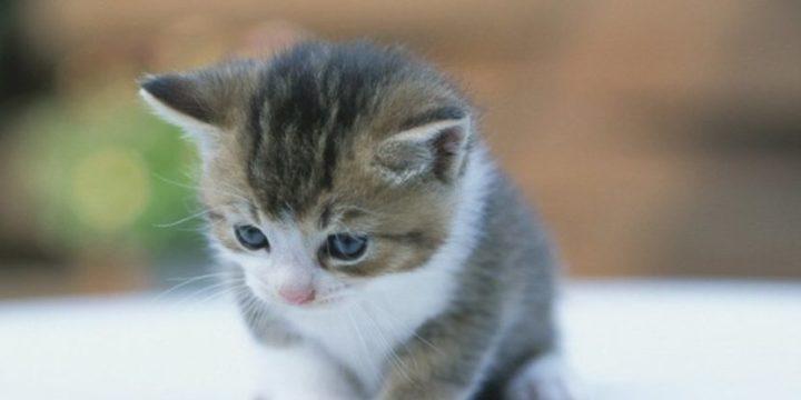 Consejos para cuidar a un gato bebé