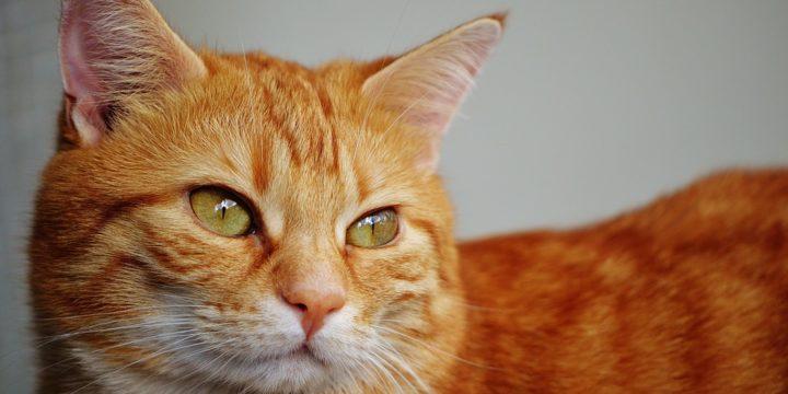 Conoce el lenguaje corporal de tu gato