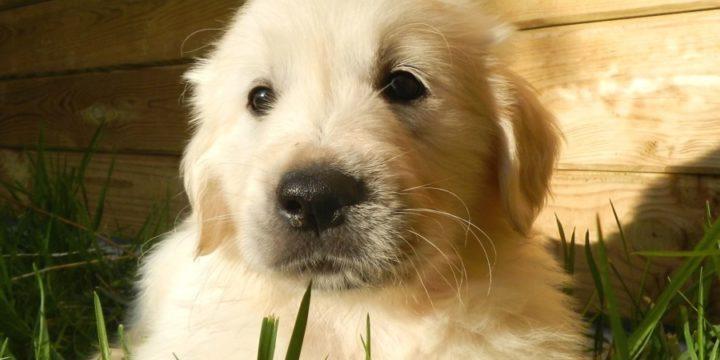 La responsabilidad de adoptar una mascota