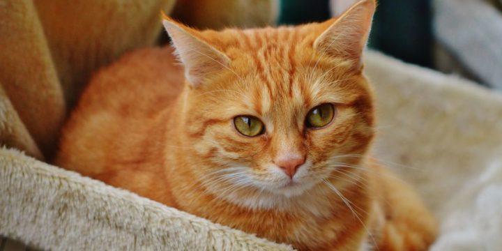 Consejos para adoptar un gato por vez primera