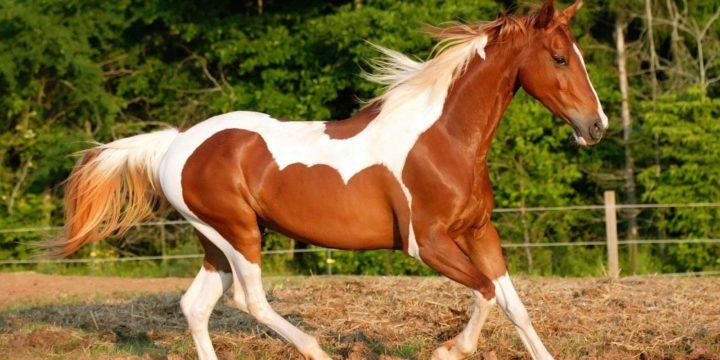 Consejos para alimentar a los caballos