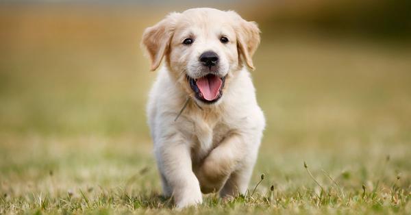 Consejos y recomendaciones para cuidar cachorros