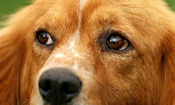 Los mejores suplementos nutricionales para perros