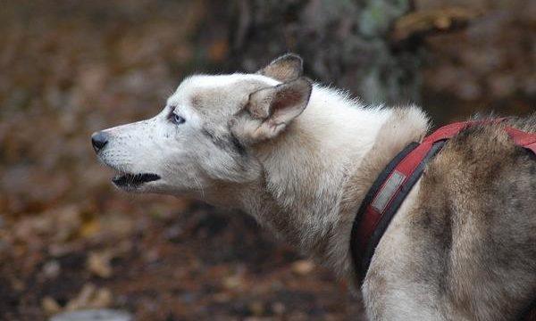 Productos indispensables para el entrenamiento canino