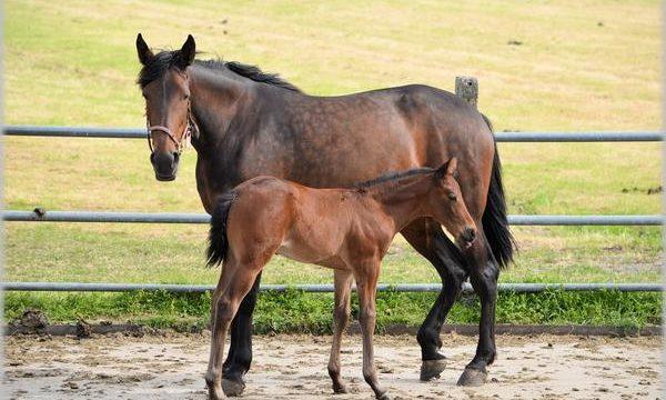 Consejos para el mejor cuidado y cría de caballos
