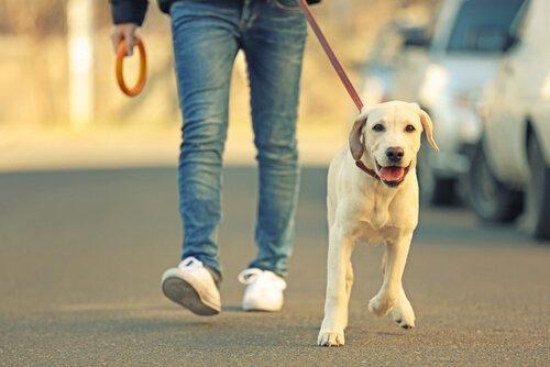 Consejos para proteger las patas de tu perro