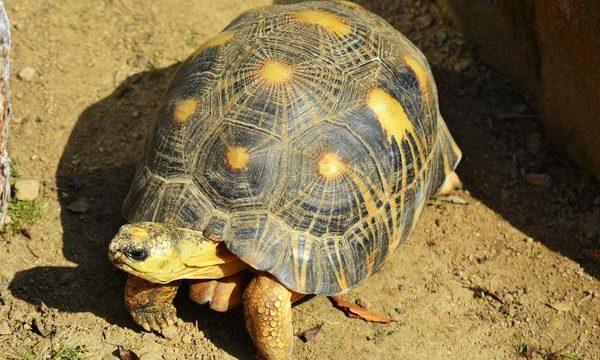 Consejos para tener tortugas de tierra y agua como mascotas