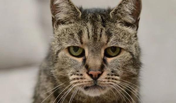 Consejos para cuidar a gatos de avanzada edad