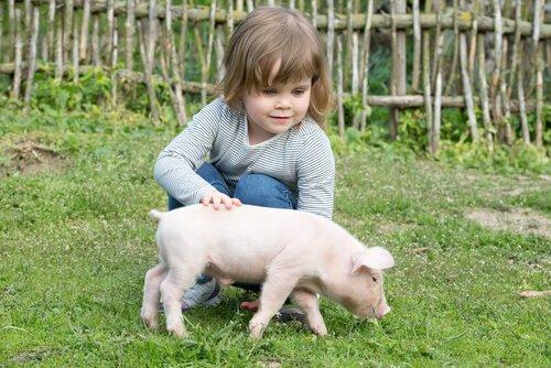Cuidados que requieren los cerdos como mascotas