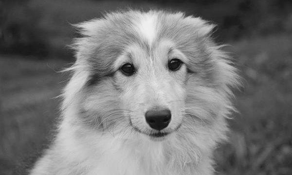 Consejos para tener una mascota saludable y feliz