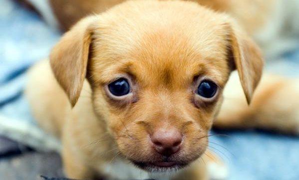 Consejos acerca del destete en la cría de perros