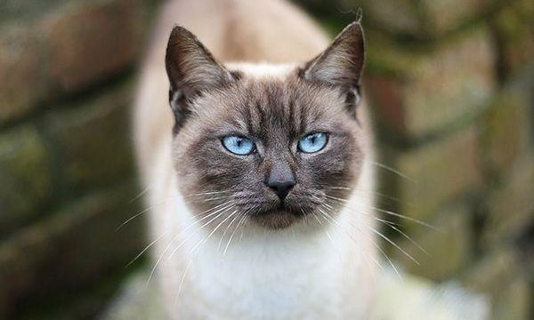 El gato como mascota: consejos valiosos para garantizar su salud y bienestar