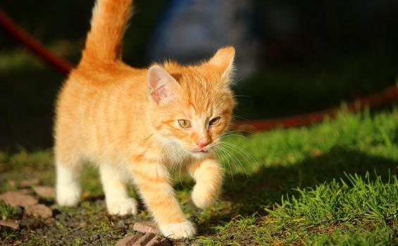 Consejos para cuidar la salud de tu gato
