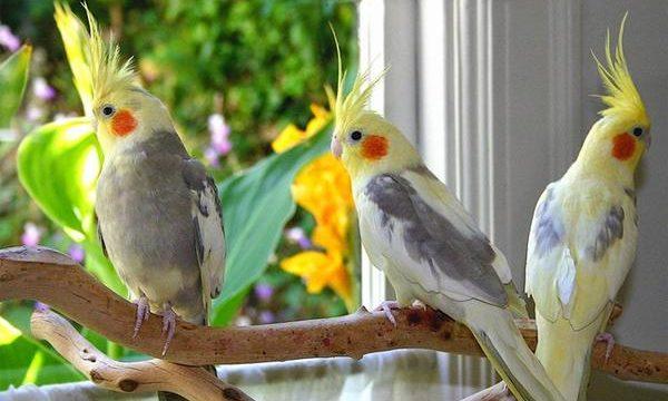 Cómo tener pájaros en casa saludables y felices