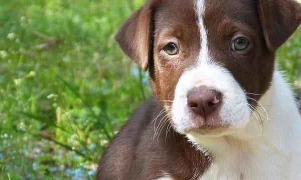 La importancia de comprender a tu perro