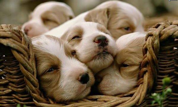 Consejos y recomendaciones para cuidar perros recién nacidos
