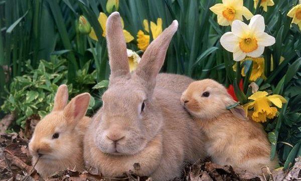 Consejos para la cría responsable de conejos de granja