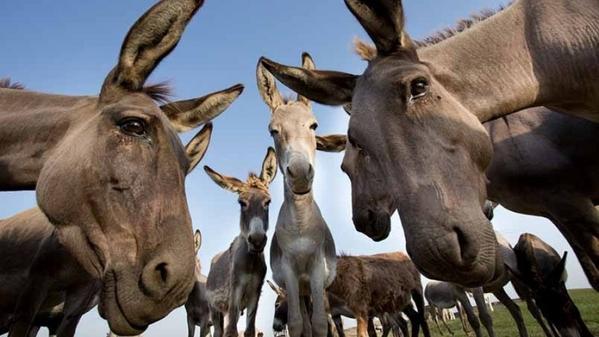 Principales medicamentos veterinarios para animales de granja