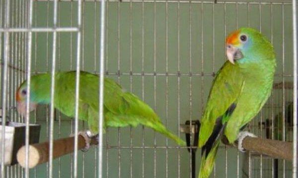 Consejos para tener aves y pájaros en casa