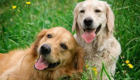 Aspectos importantes de la nutrición canina