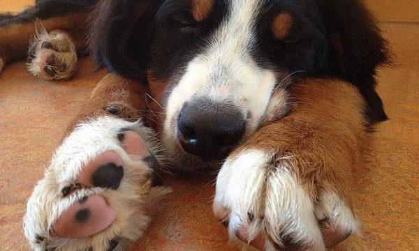 Consejos para recortar de manera segura las uñas de tu perro