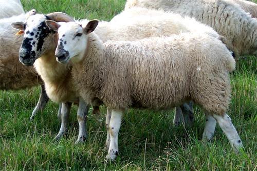 Principales enfermedades que afectan a los animales de granja