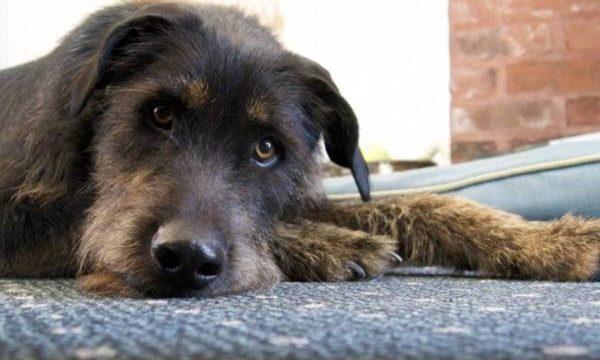 Eutanasia en perros y gatos, cómo es y cuando debe considerarse