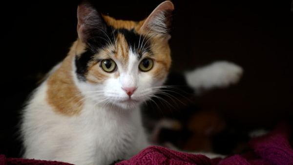 Consejos para cuidar a un gato tras una operación