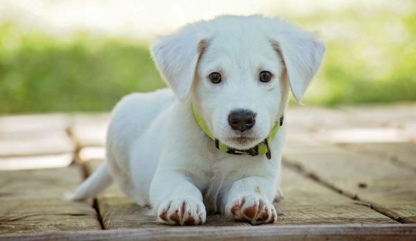 Propósitos para el año 2019 de las mascotas y sus dueños