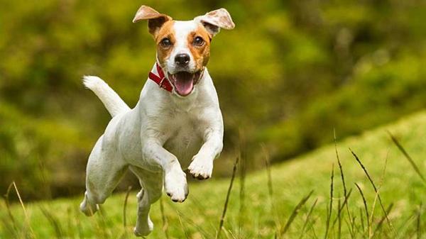Los mejores consejos para el cuidado de las mascotas