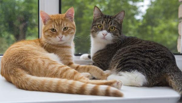 Cómo puedo cuidar mejor y tener una buena relación con mi gato