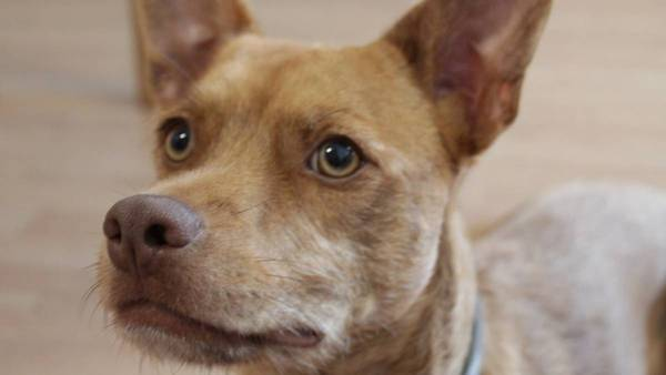 Consecuencias de la diabetes en las mascotas