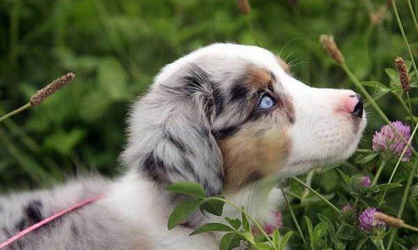 La sarna en las mascotas, causas y tratamiento