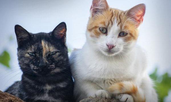 Los mejores cuidados para el gato doméstico