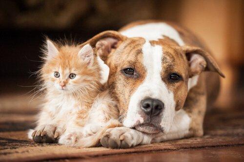 Consejos para cuidar correctamente a perros y gatos