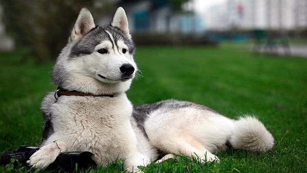Conociendo mejor al perro como mascota