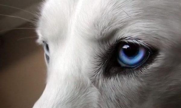 Cómo cuidar los ojos de las mascotas