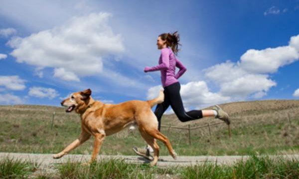 Recomendaciones para salir a correr con el perro