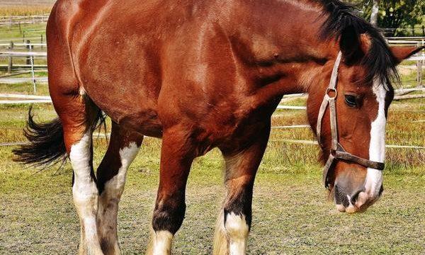 Cómo tener una explotación pecuaria libre de maltrato animal